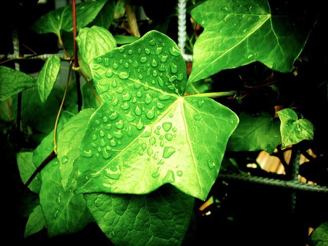 kapky na listech